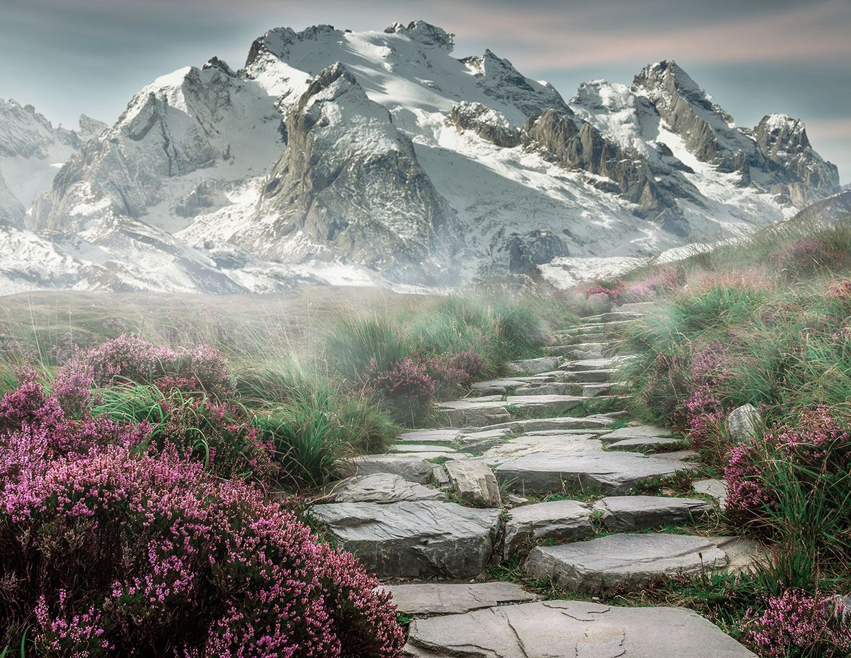 Image of stone steps going through field of heather up into mountains.